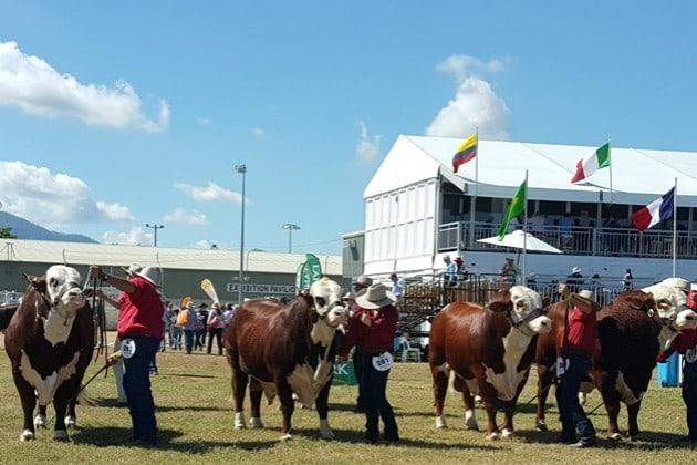 Beef Australia