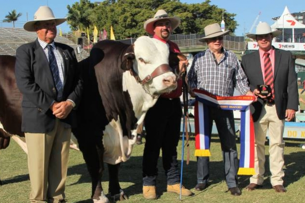 Bos indicus breed claims Ekka's largest eye muscle for second year running