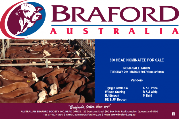 2017 Roma Braford / Braford Infused Store Sale & Show
