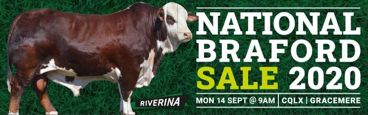 Riverina National Braford Sale 2020