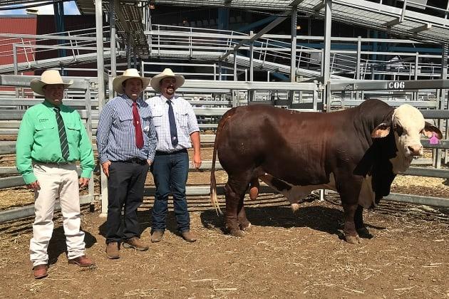Top Price Bull Little Valley Kurt at the 2020 Riverina National Braford Sale
